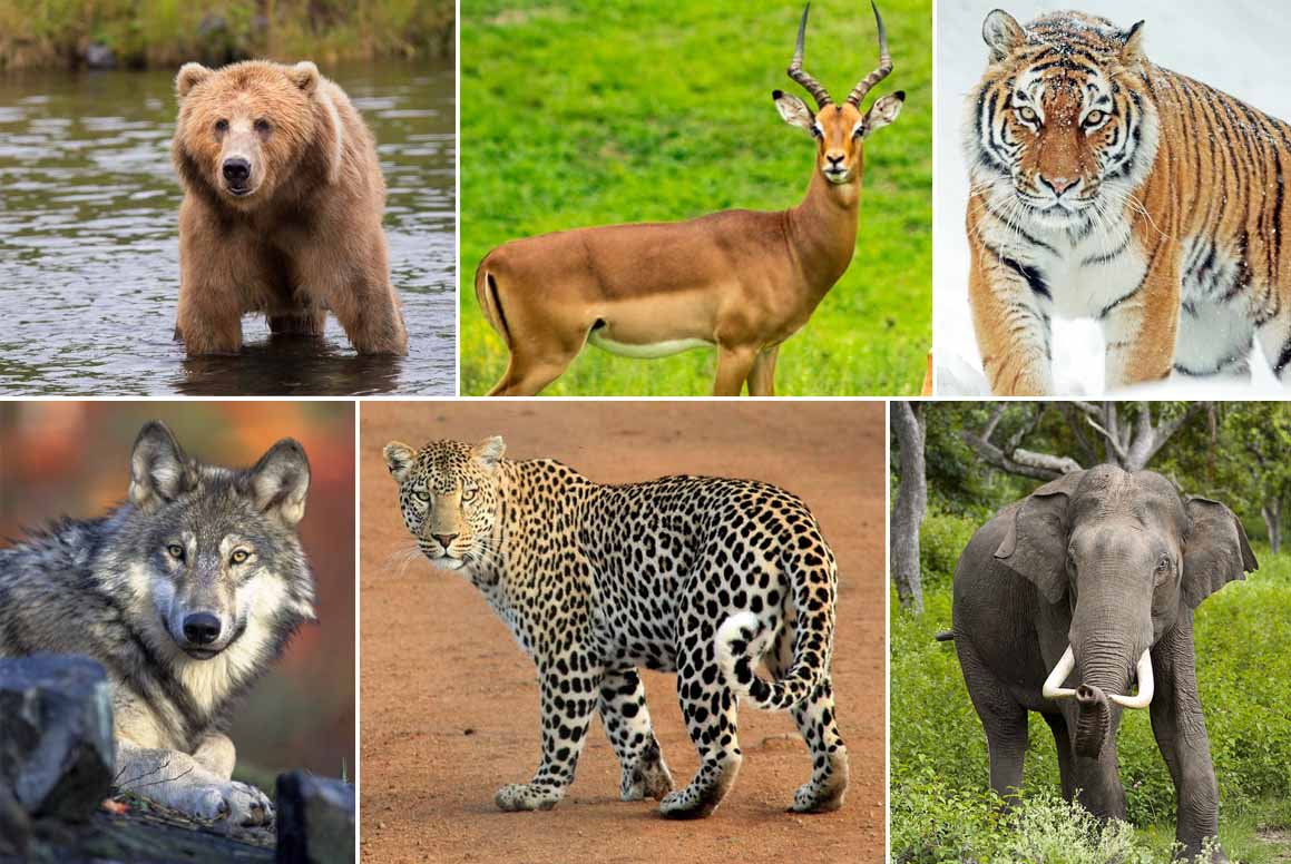 If Human Needs Balancedt How Animals Survive On A