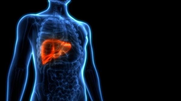 Anatomia do fígado humano.  3D - Ilustração (Mina mágica) s
