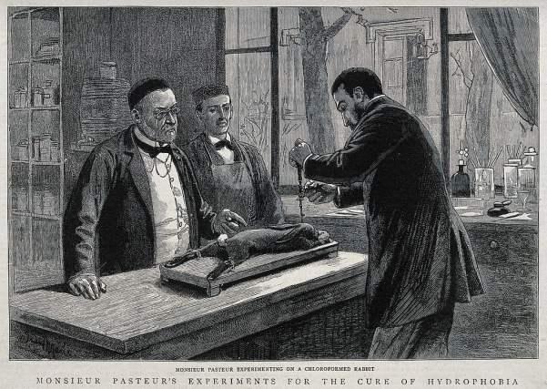 Louis Pasteur injeta vírus da raiva no cérebro de um coelho