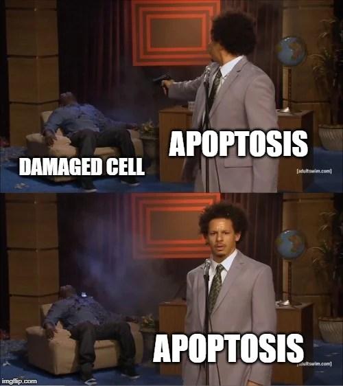 apoptosis meme