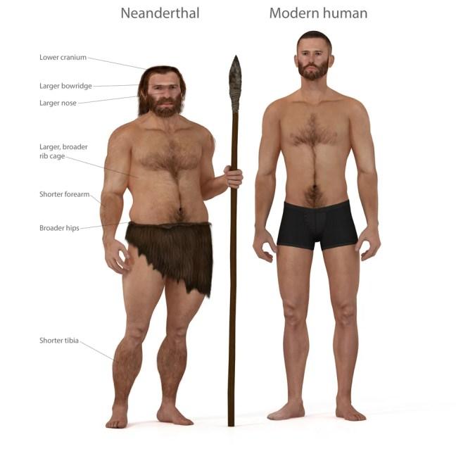 Ilustração digital e renderização de um homem neandertal (Nicolas Primola) s
