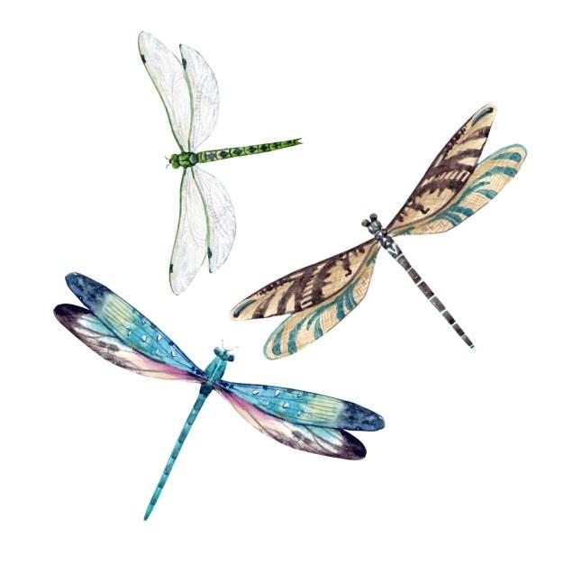Conjunto aquarela de libélula (Anastasia Lembrik) S