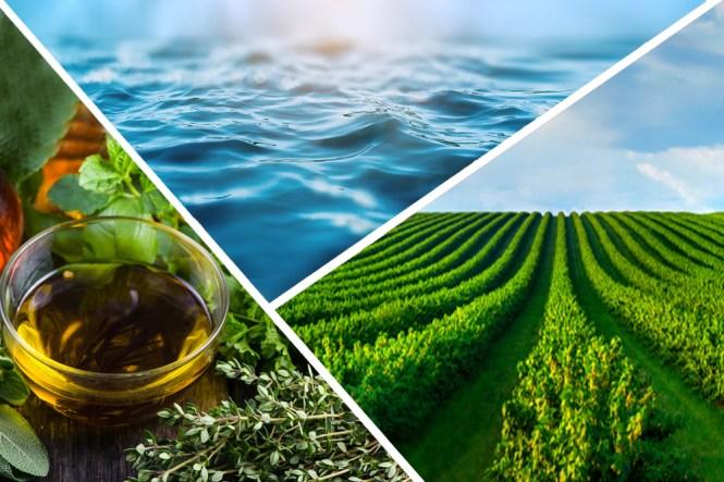 Os muitos recursos de provisionamento e serviços que os ecossistemas fornecem.