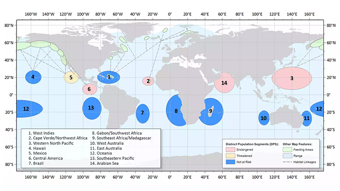 whale-chart