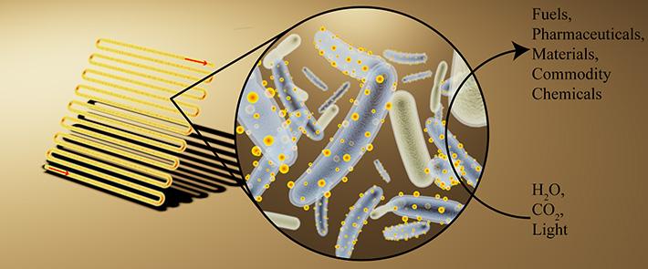 cyborg bacteria graphic kelsey sakamoto