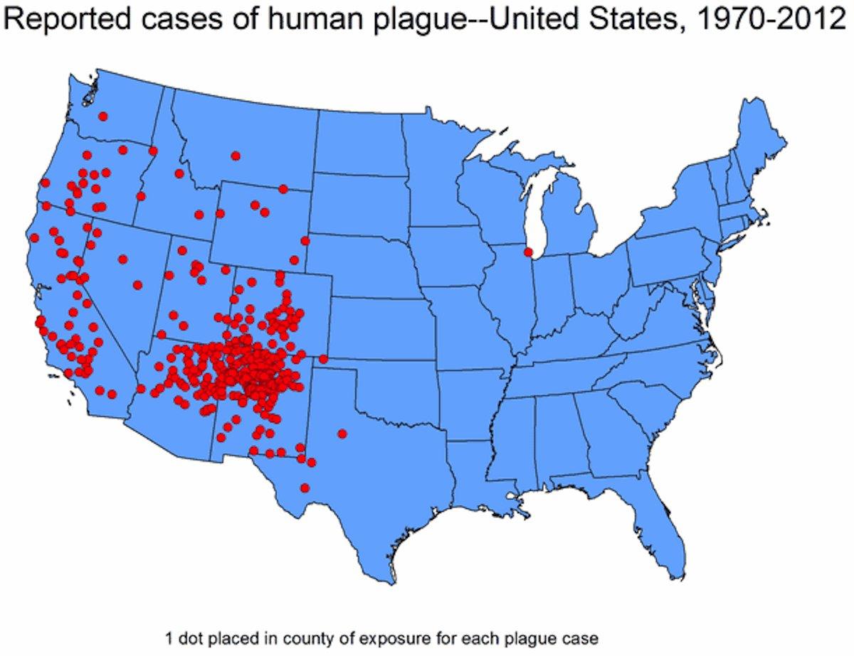 Nobody Panic But Fleas Carrying Bubonic Plague Have