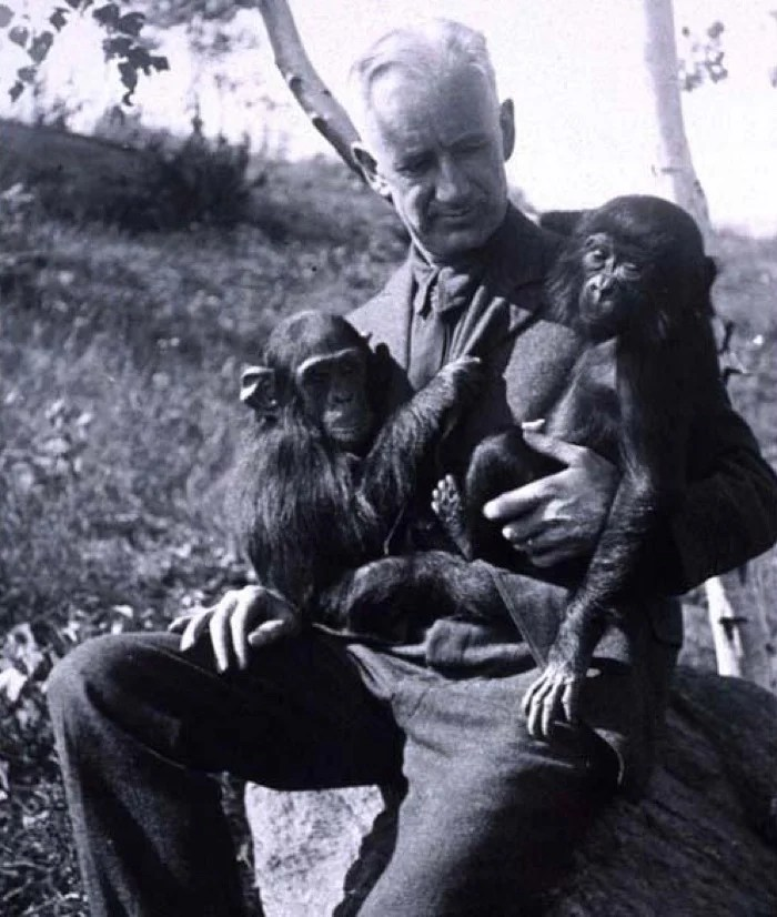 722 oliver humanzee chimp hybrid 2