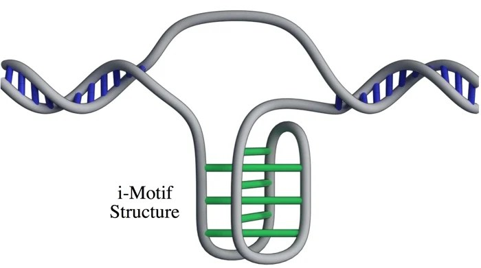 019 dna i motif structure living cells 2