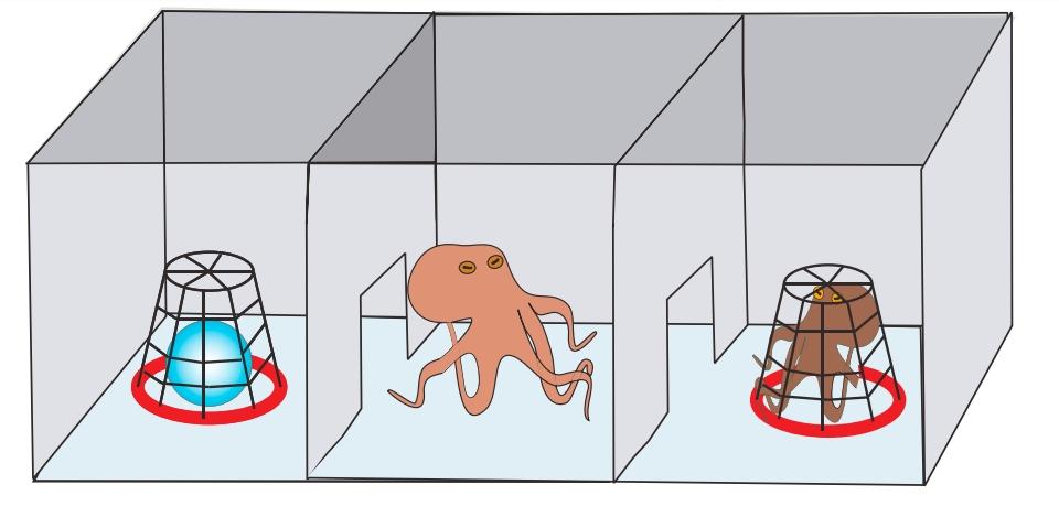 octopus mdma experiment inset