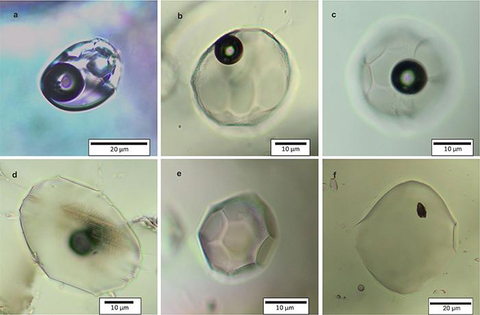 olivine inclusions body image
