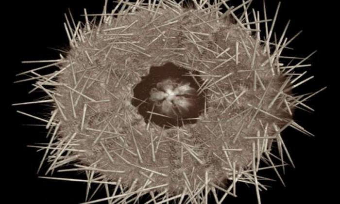 011 sea urchin 3