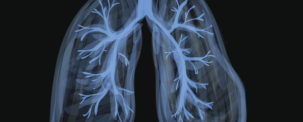 For The First Time, Scientists Find Fat Can Clog Lungs And Airways, Not Just Your Heart