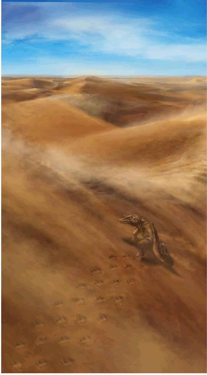 010 ancient canyon tracks 3