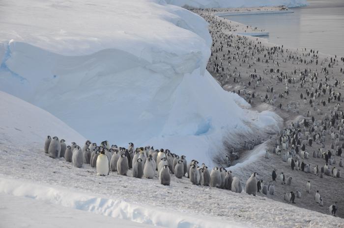010 penguins