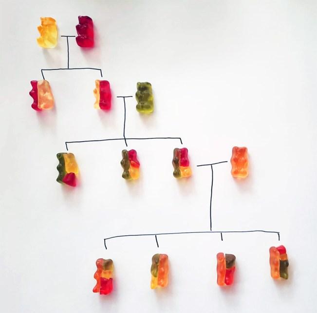 gummy bear genetics colour corrected body 2