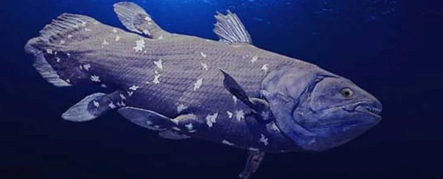 Bizarre Coelacanth Hasn't Spent 65 Million Years Unchanged After All, Its Genome Reveals