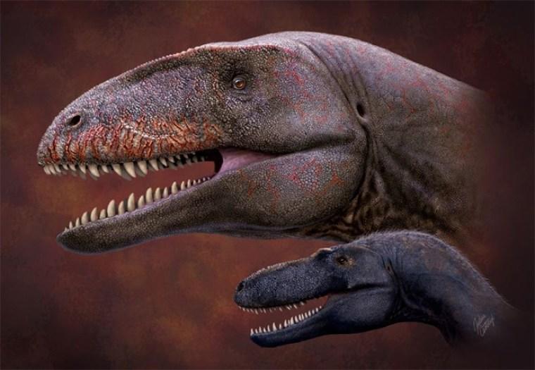 Illiustration de Ulughbegsaurus en comparación con el tiranosaurio más pequeño, Timurlengia