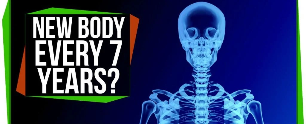 WATCH Does Your Body Really Regenerate Itself Every 7 Years