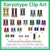 karyotype diagrams