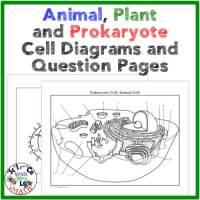 Cell Diagrams