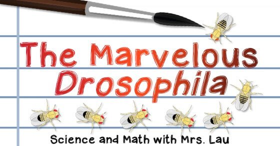 The Marvelous Drosophila Exciting World Of Fruit Fly Genetics Science And Math With Mrs Lau