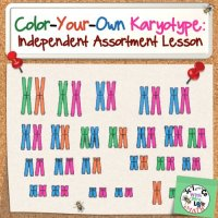 Karyotype Coloring Activity