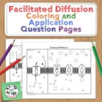 Facilitated Diffusion Coloring Activity