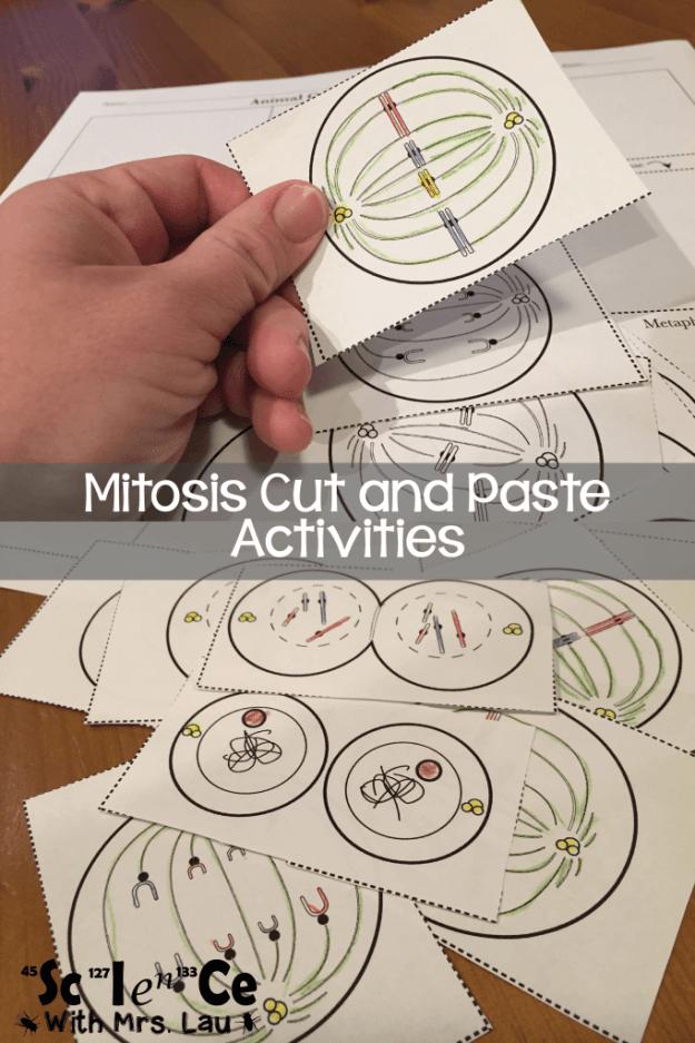 mitosis activities-01