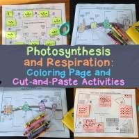 Photosynthesis and Respiration Activities