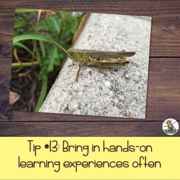 Bring in hands-on learning experiences often