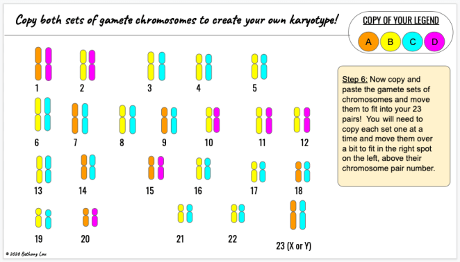 Students will each have their own unique independent assortment of chromosomes