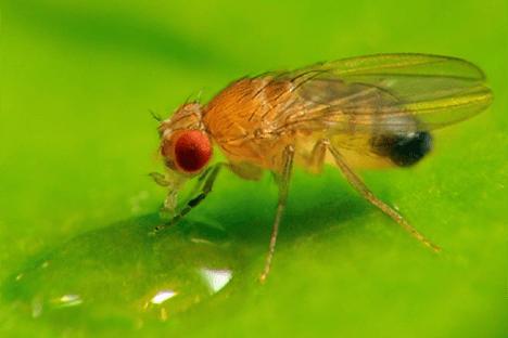 Superhero Flies