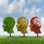 Brain Aging - Image: Kalvicio de las Nieves