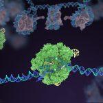 Cas 9 - Image: Innovative Genomics Institute