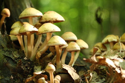 fungi 2800