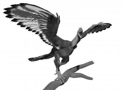 Zname Barvu Archeopteryxe Dinosaurusblog