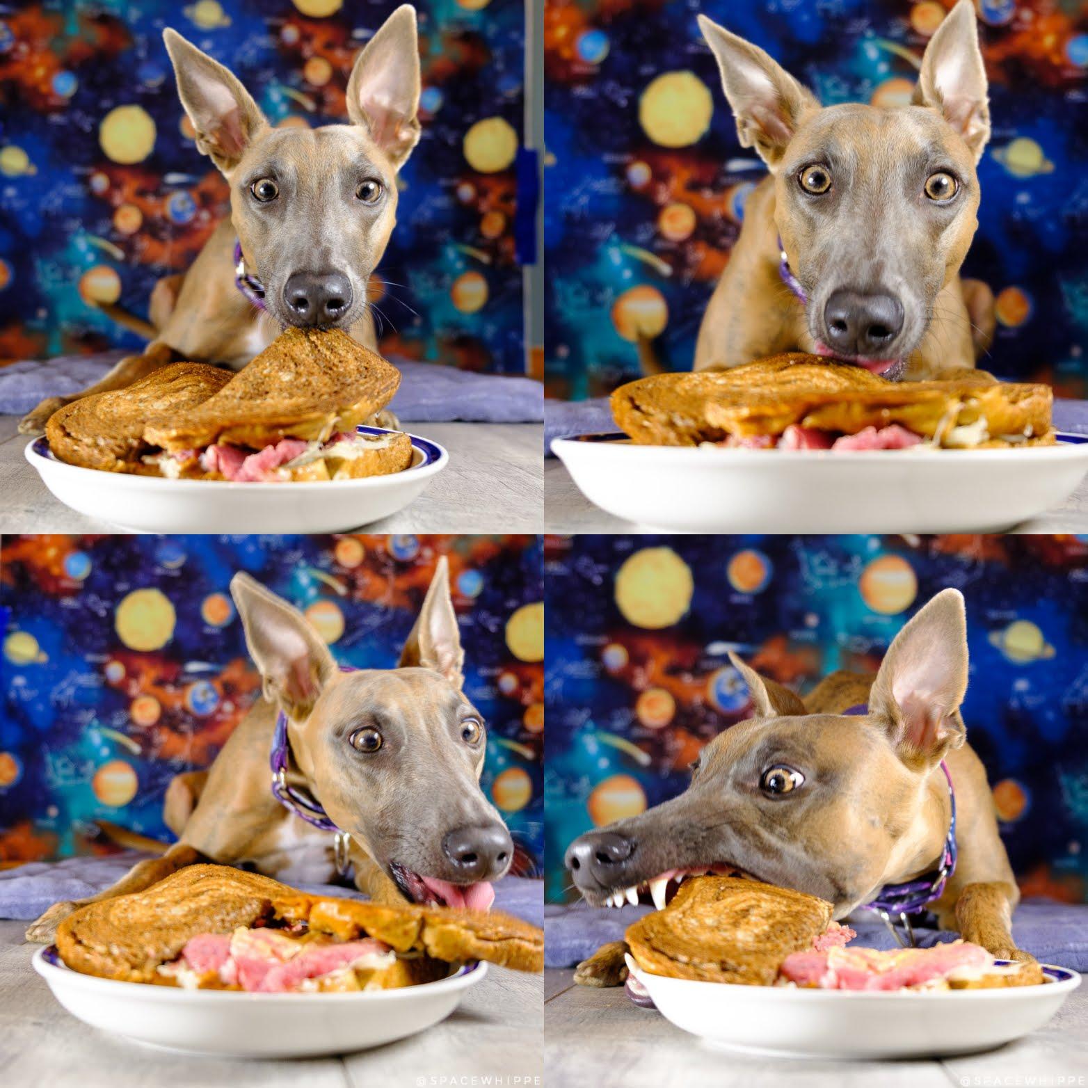 Kuiper devours a corned beef sandwich.