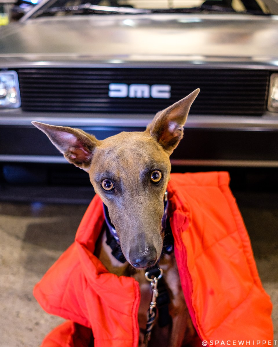 Kuiper wears an orange vest and sits in front of a DeLorean.