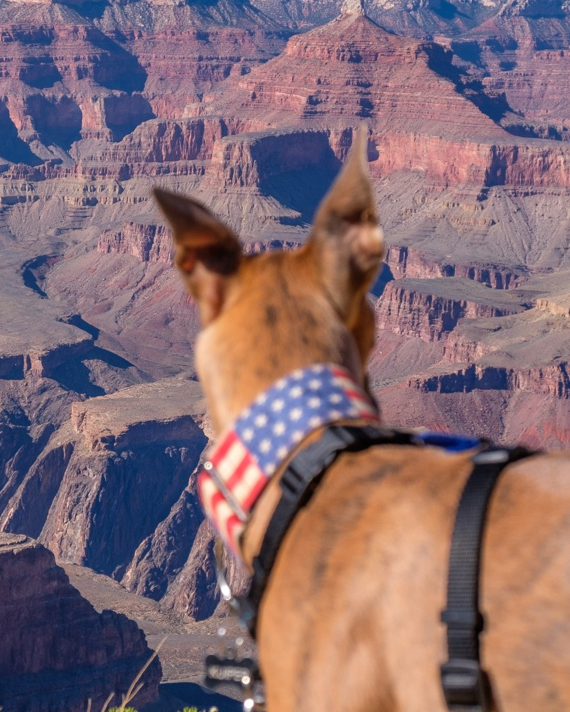 Kuiper looks out at the Grand Canyon. The background is in focus.