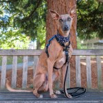 Kuiper sits on a bench in front of a Douglas Fir tree.