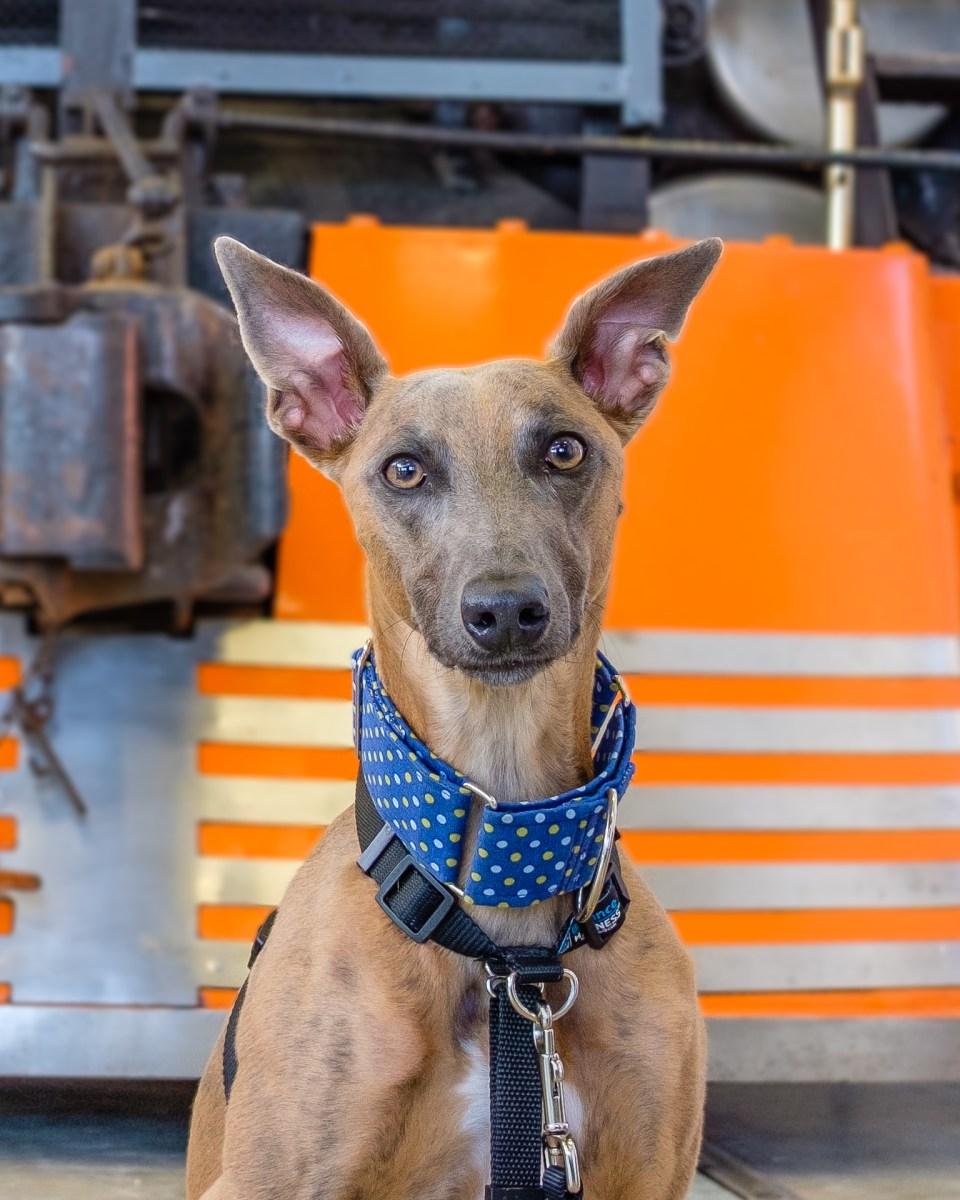 Kuiper poses with an orange locomotive.