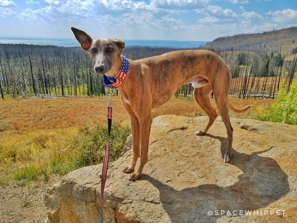 Kuiper stands on a rock next to a parking lot in Yellowstone National Park.