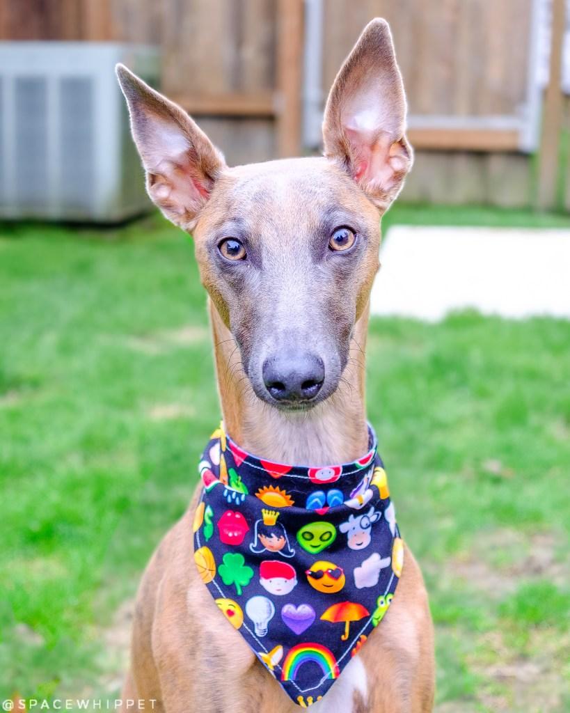 Kuiper wears a bandana featuring emoji fabric.