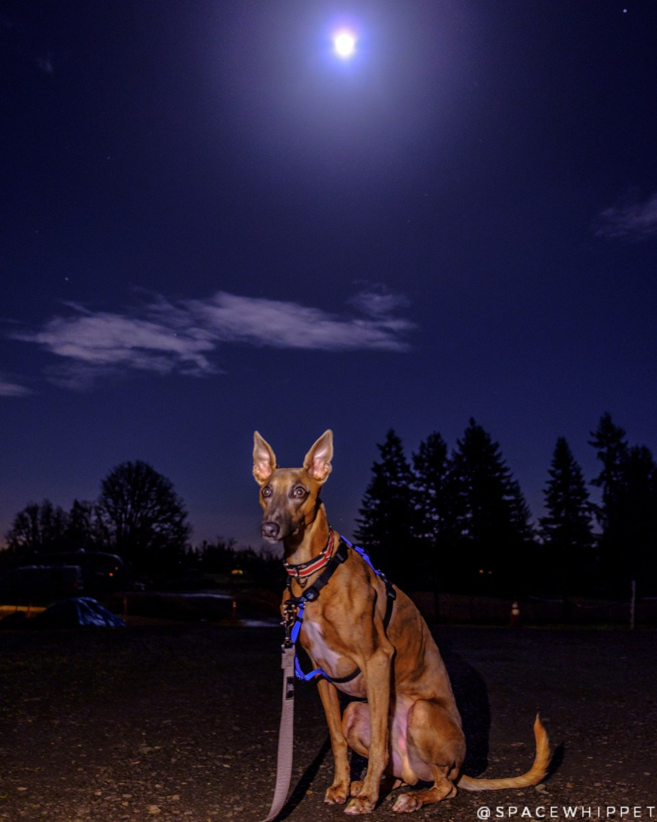 Kuiper poses with the Moon in the background.