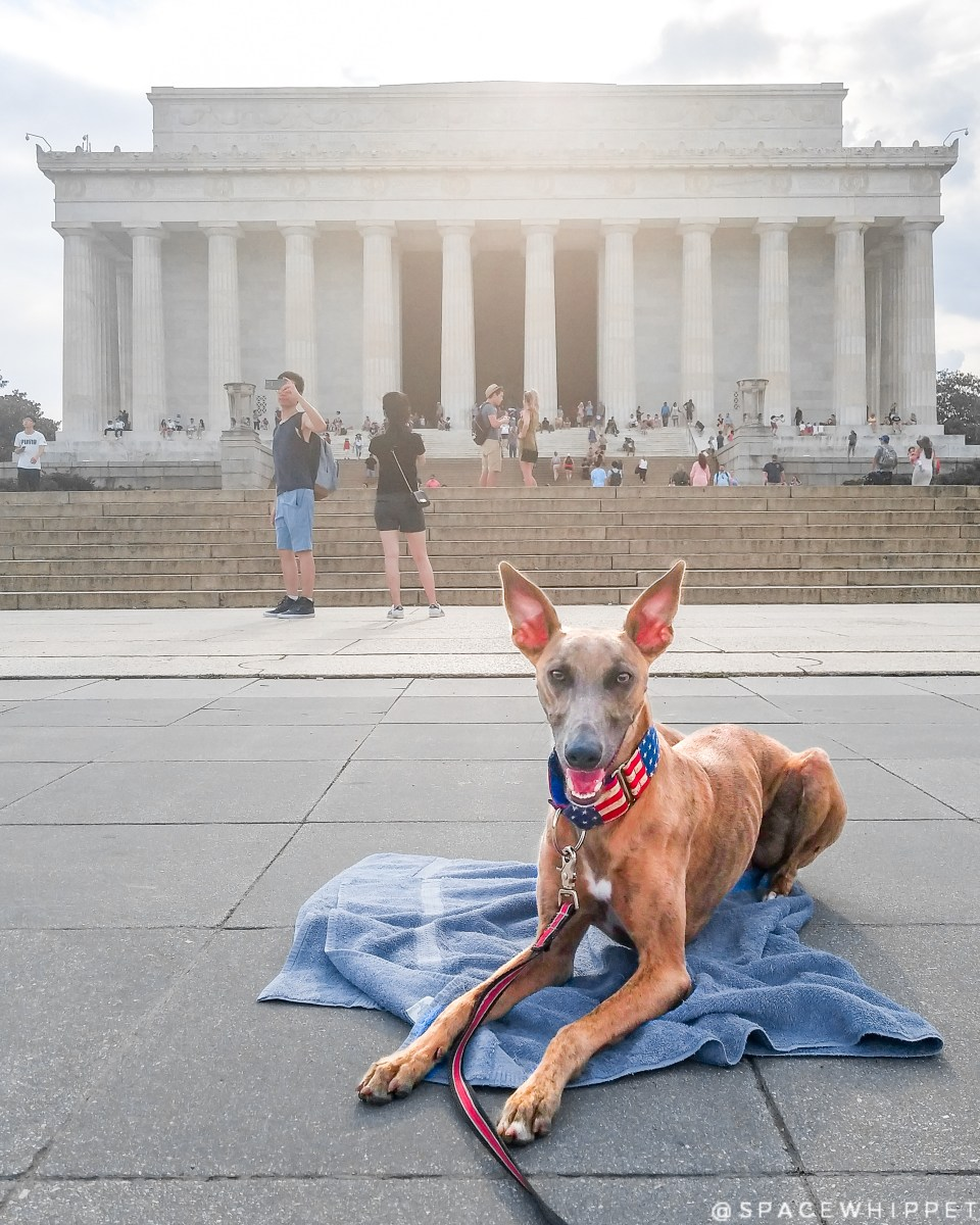 Kuiper rests on his towel in front of the Lincoln Memorial.
