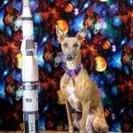 Kuiper sits proudly next to a paper model of the Saturn V.