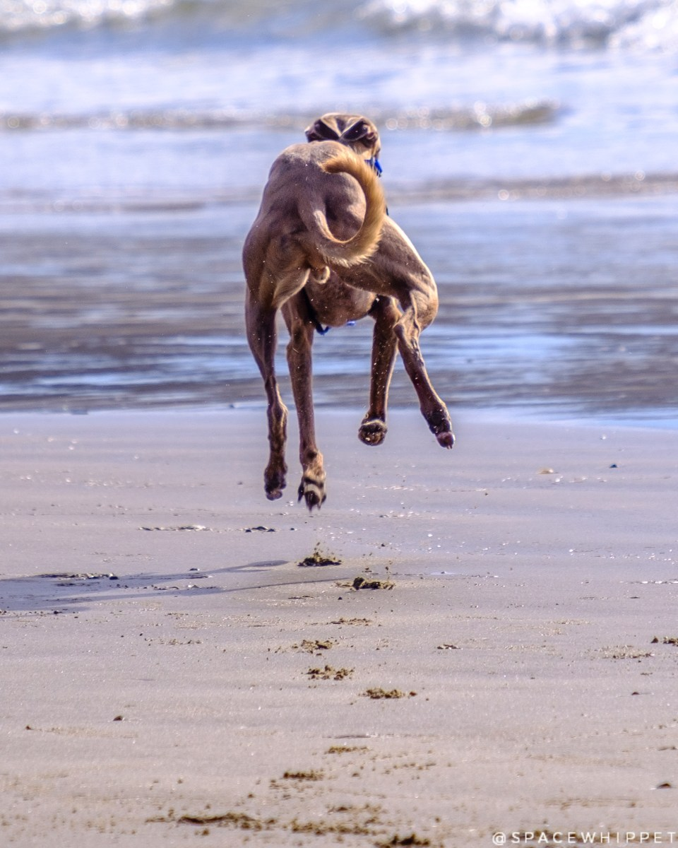 Kuiper leaps away on the beach.