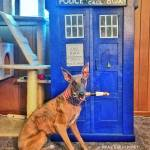 Kuiper poses with a TARDIS. He is holding a sonic screwdriver in his mouth.