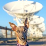 Kuiper poses with a row of VLA antennas.