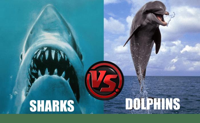 sharks_vs_dolphins